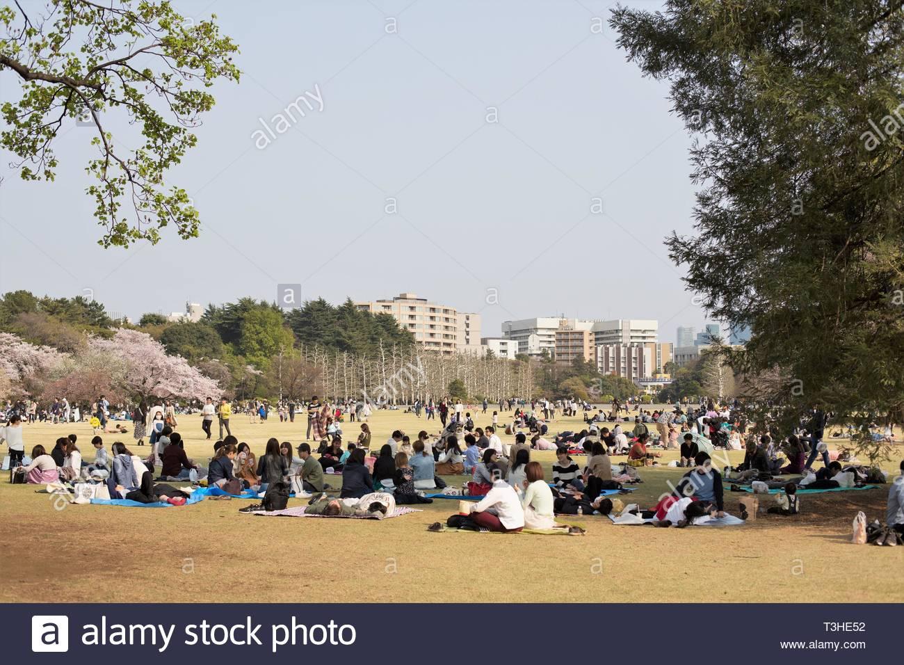 Crowds of people sit on blankets at Shinjuku Gyoen National Garden in Tokyo Japan. - Stock Image