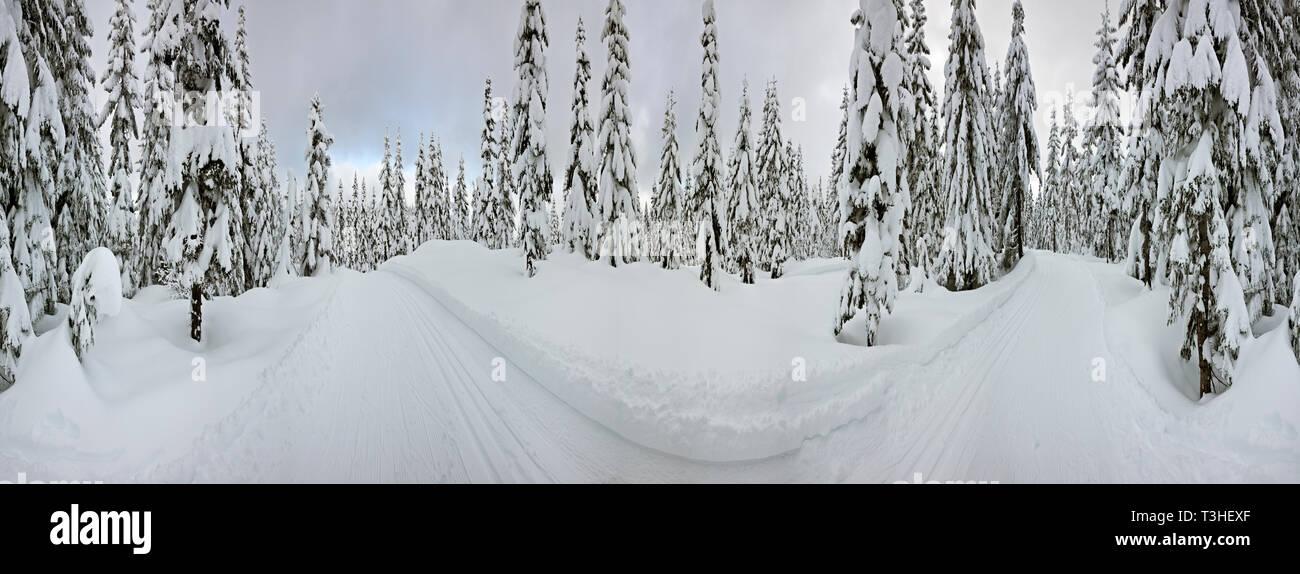 WA16127-00...WASHINGTON - Groomed cross-country ski trail on Amabils Mountain in the Okanogan - Wenatchee National Forest. - Stock Image
