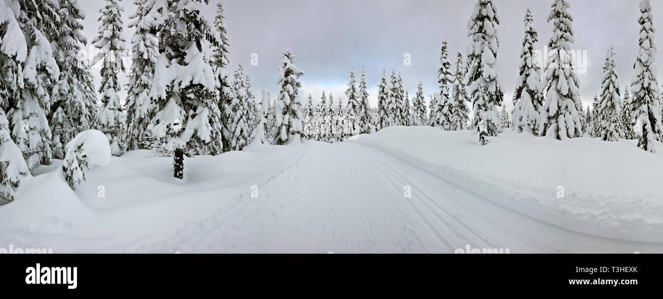 WA16128-00...WASHINGTON - Groomed cross-country ski trail on Amabils Mountain in the Okanogan - Wenatchee National Forest. - Stock Image