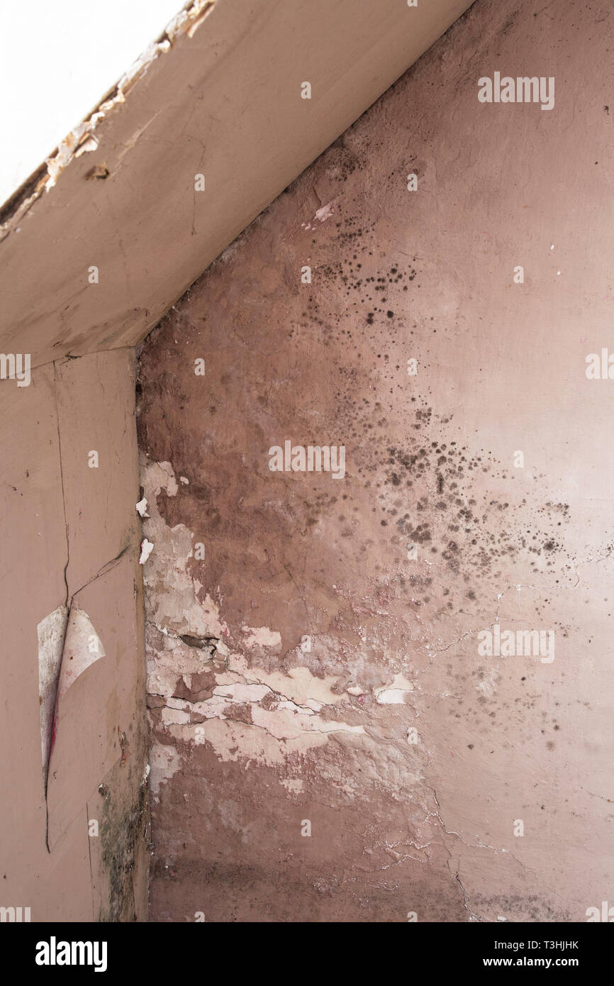 Water damage causing mold growth on the interior walls of a property - Stock Image