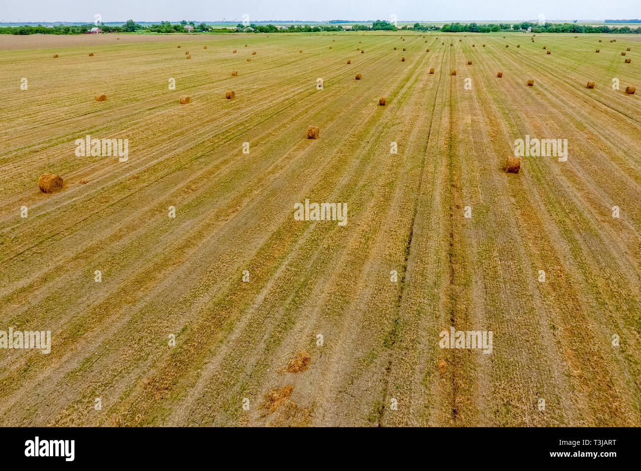 Bales of hay in the field. Harvesting hay for livestock feed. Landscape field with hay. - Stock Image