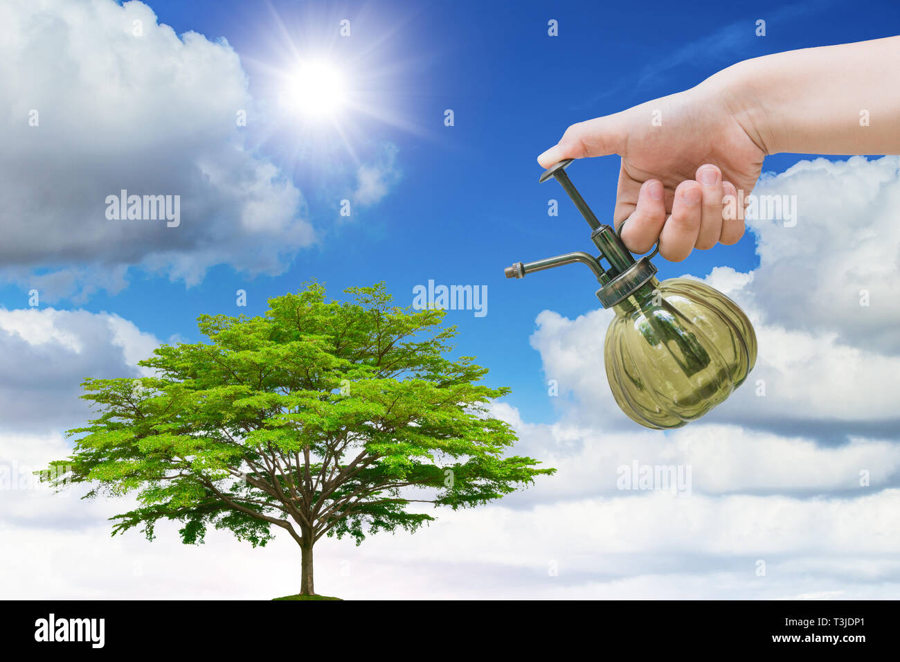 plant the tree concept earth day, hand watering spray green tree with blue sky. - Stock Image