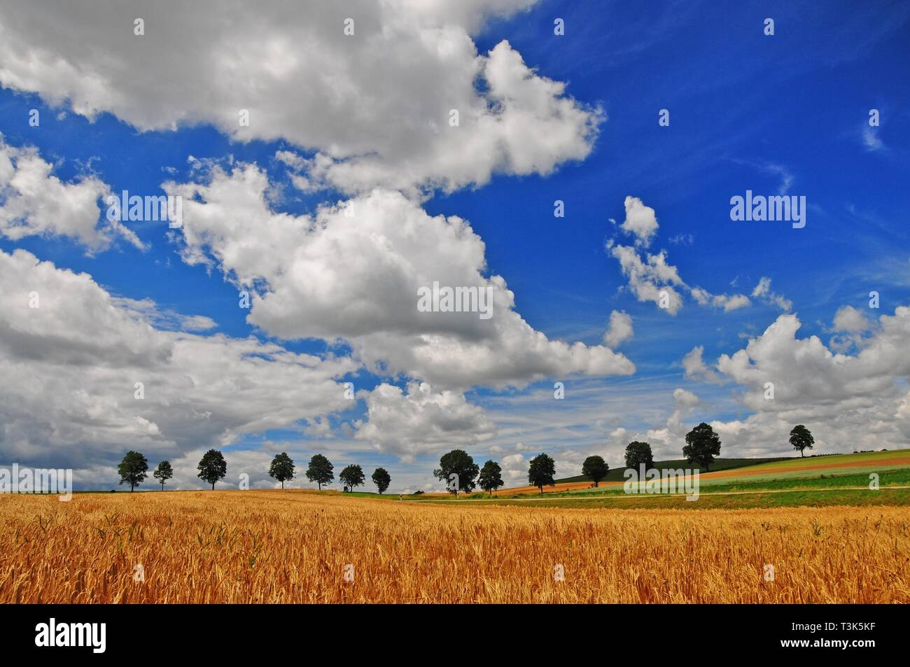 Summery cloudy sky, fields, Unterallgau near Kirchheim, Swabia, Bavaria, Germany, Europe - Stock Image
