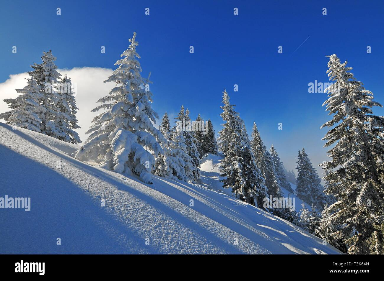 Mountain forest in winter, Laber, Oberammergau, Upper Bavaria, Bavaria, Germany, Europe - Stock Image