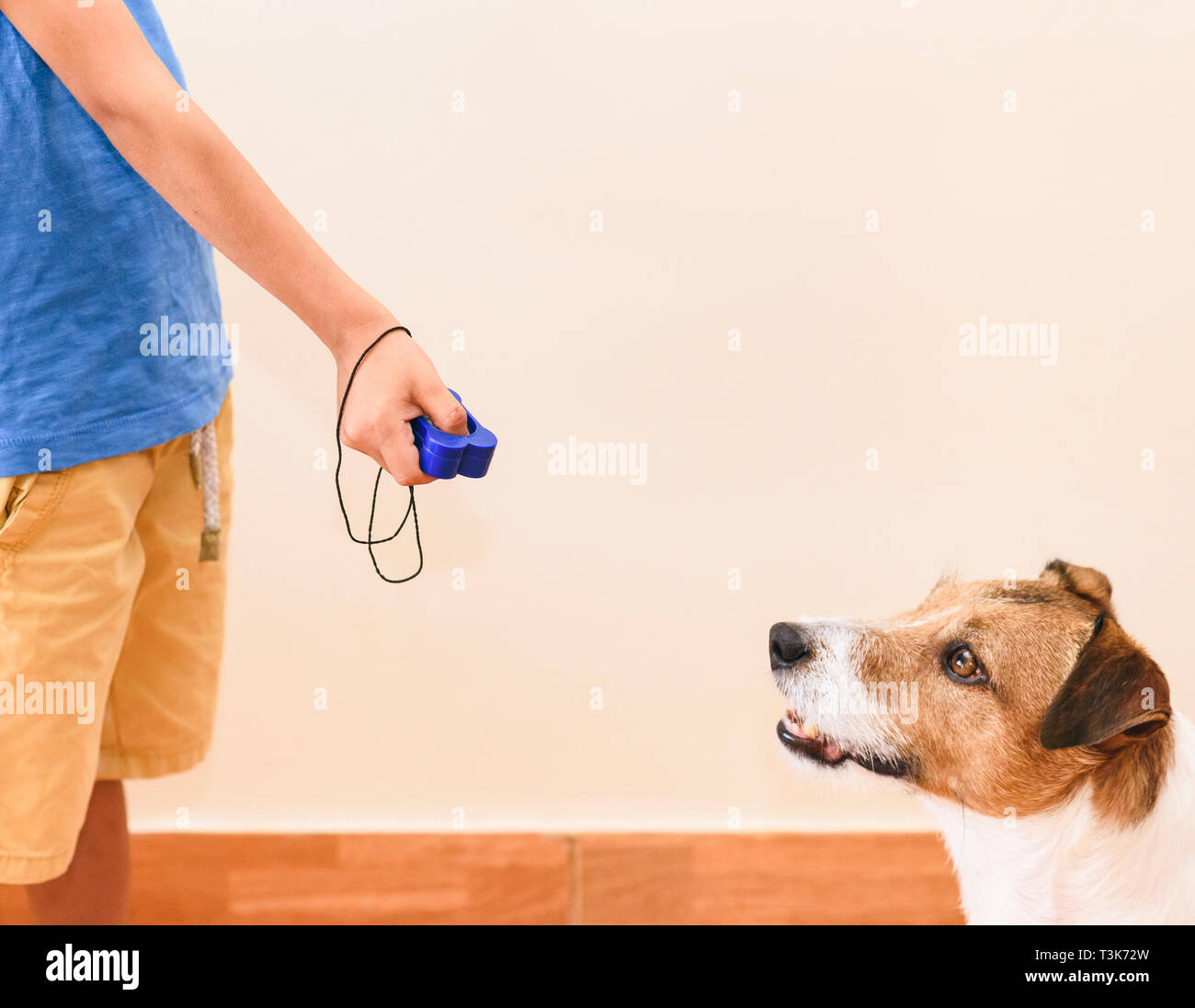 Concept of positive reinforcement dog training with kid using clicker for obedience exercise - Stock Image