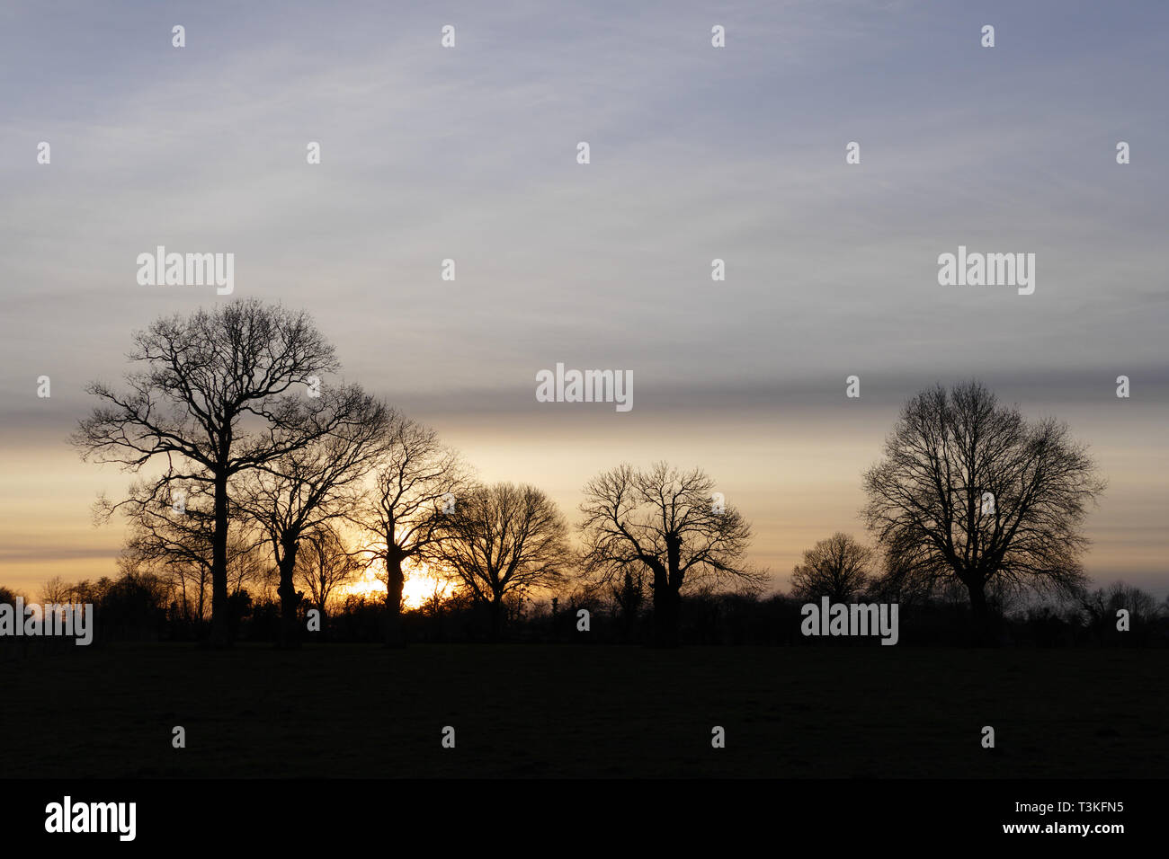 Sunset with trees in daylight (oaks and oaks tadpoles). North Mayenne (Loire country, France). - Stock Image