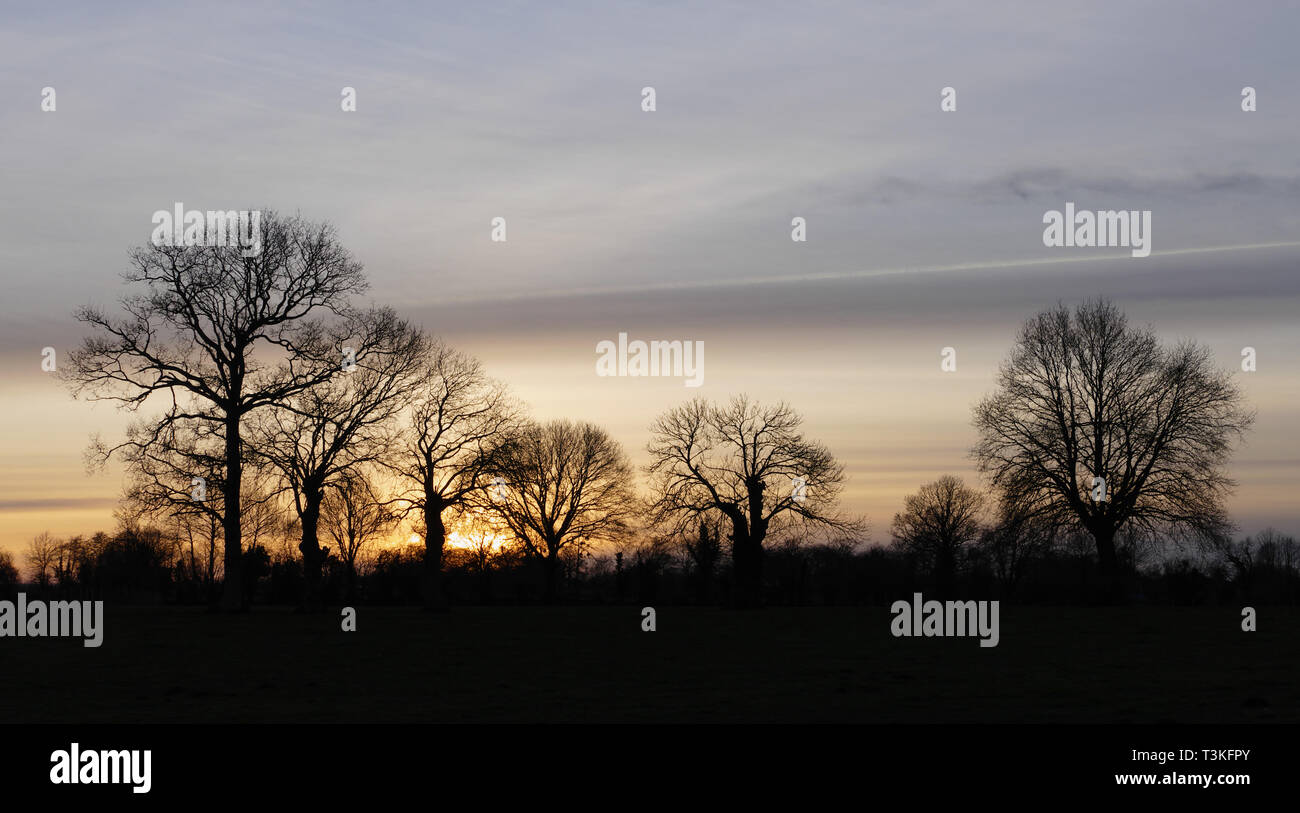 Sunset with trees in daylight (oaks and oaks tadpoles). North Mayenne (Loire country, France, Europe). - Stock Image