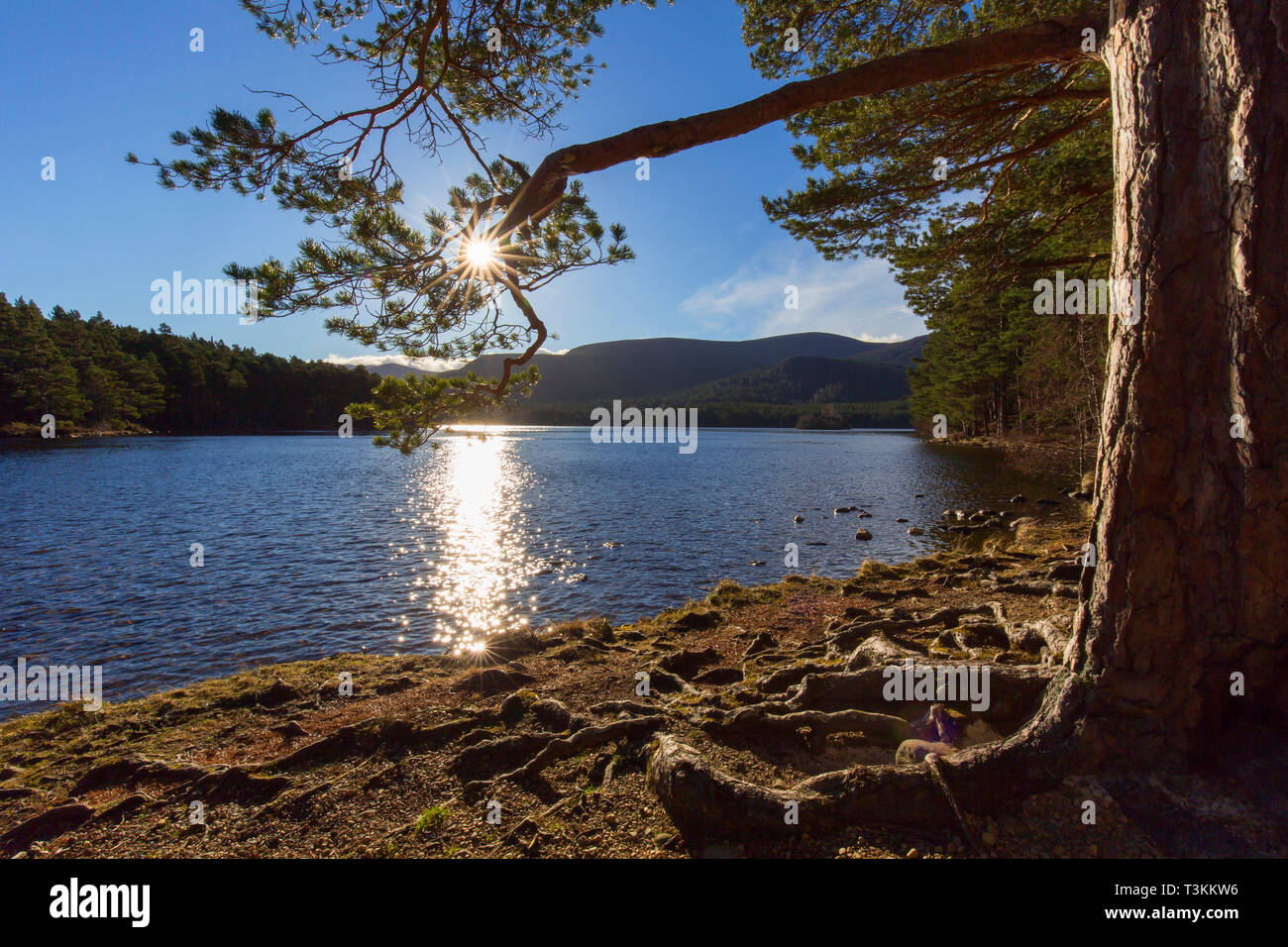 Loch an Eilein in the Rothiemurchus Forest, Cairngorms National Park near Aviemore, Badenoch and Strathspey, Scotland, UK - Stock Image