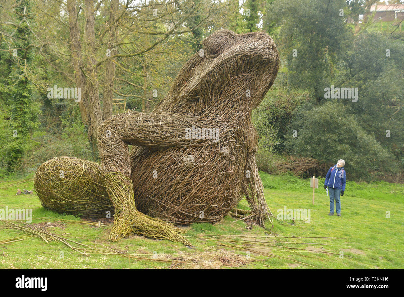 Willow sculpture of a Giant Toad beside the footpath  in Waterworks Valley on Jersey CI - Stock Image