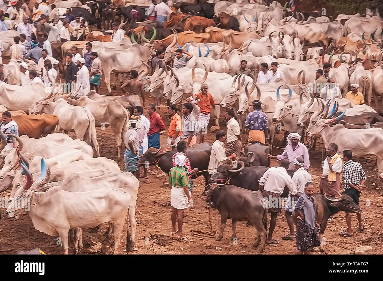 Cattle Market Kerala India Stock Photos & Cattle Market