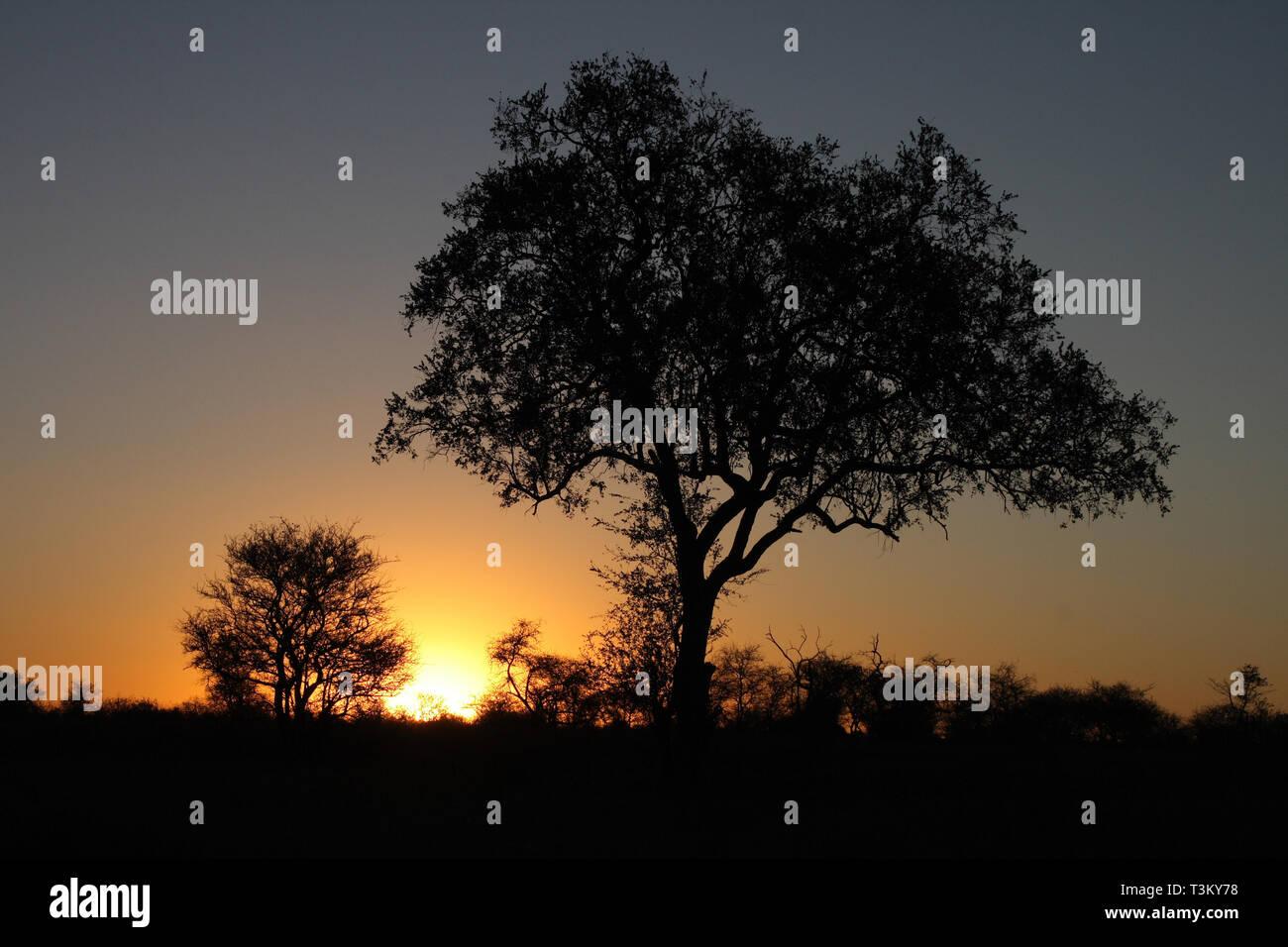 Sonnenuntergang Krüger Park Südafrika / Sundown Kruger Park South Africa / - Stock Image