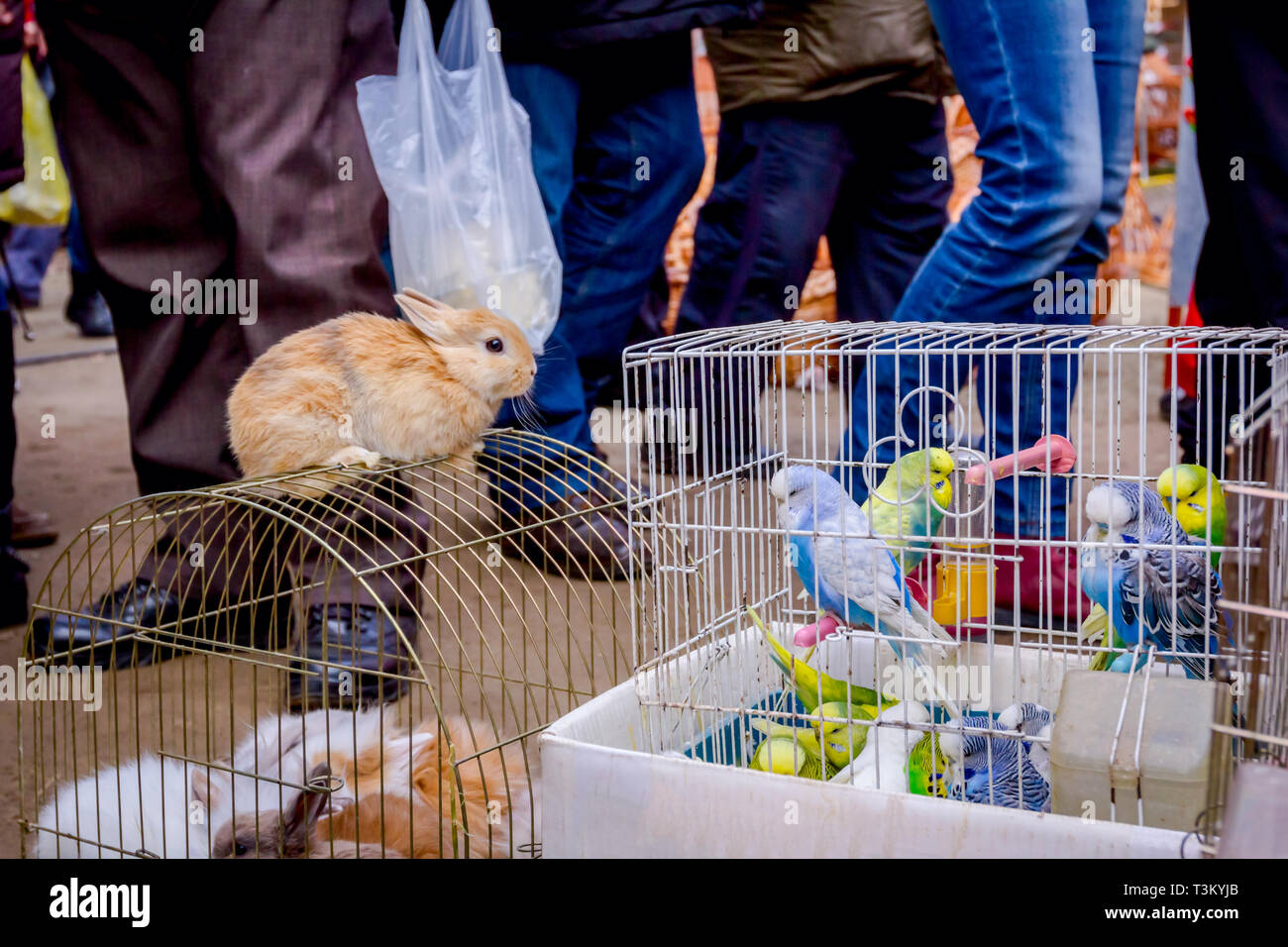 Rabbits In Cages Stock Photos & Rabbits In Cages Stock