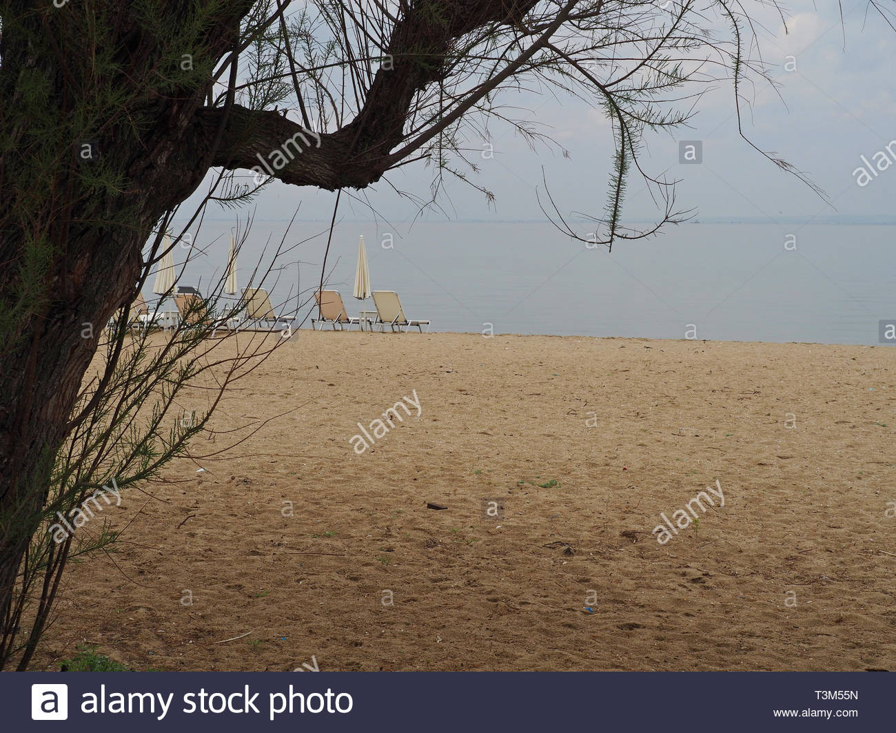 Unoccupied Coffee Shop Deck Chairs At The Seafront, View Behind A Tree