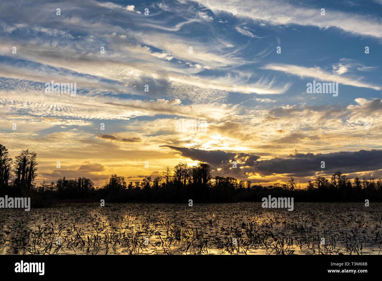 Landscape sunset on east side of Okefenokee swamp refuge. Stock Photo