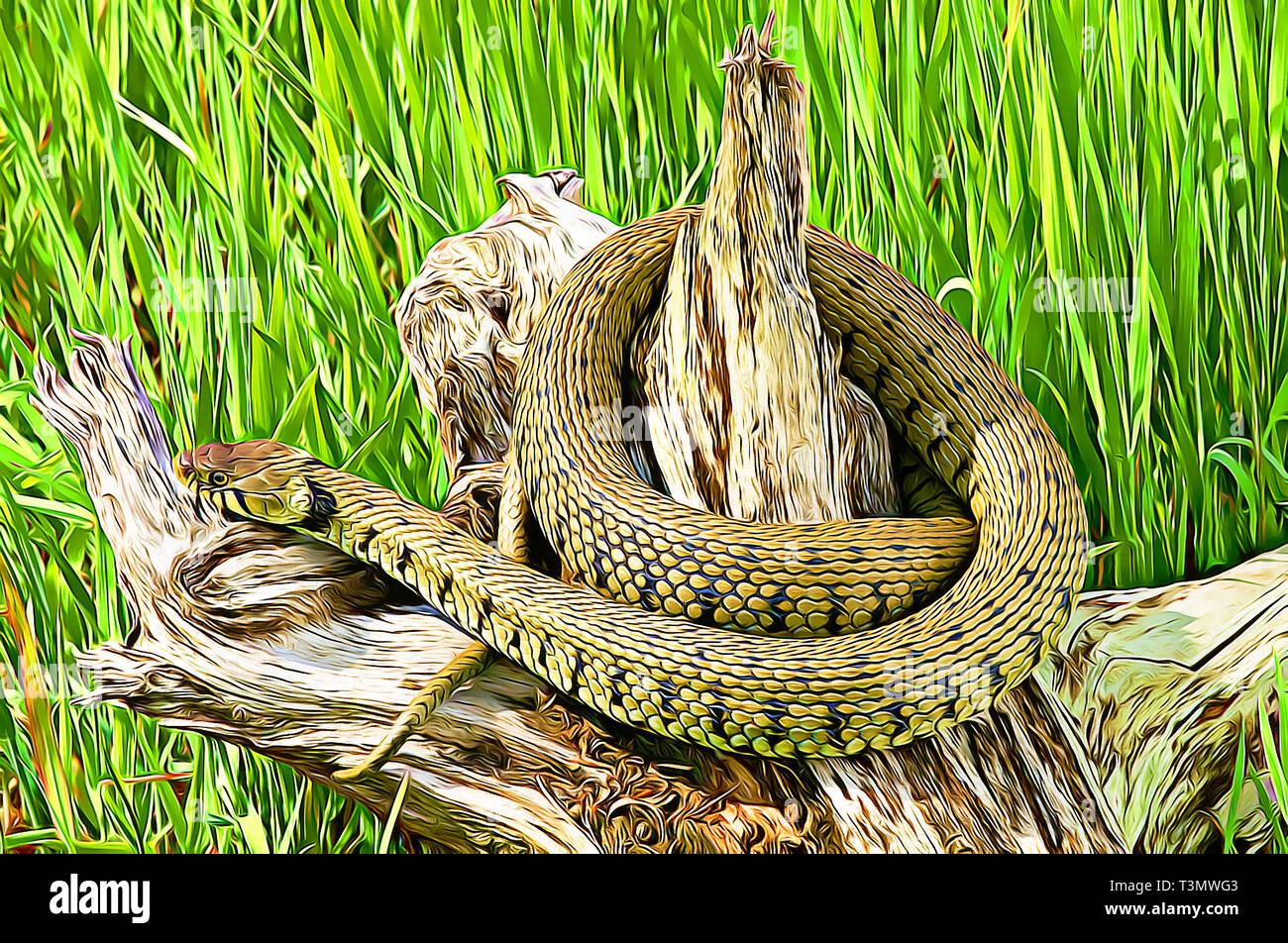 Grass Snake (Natrix Natrix)  Digital art filter - Stock Image