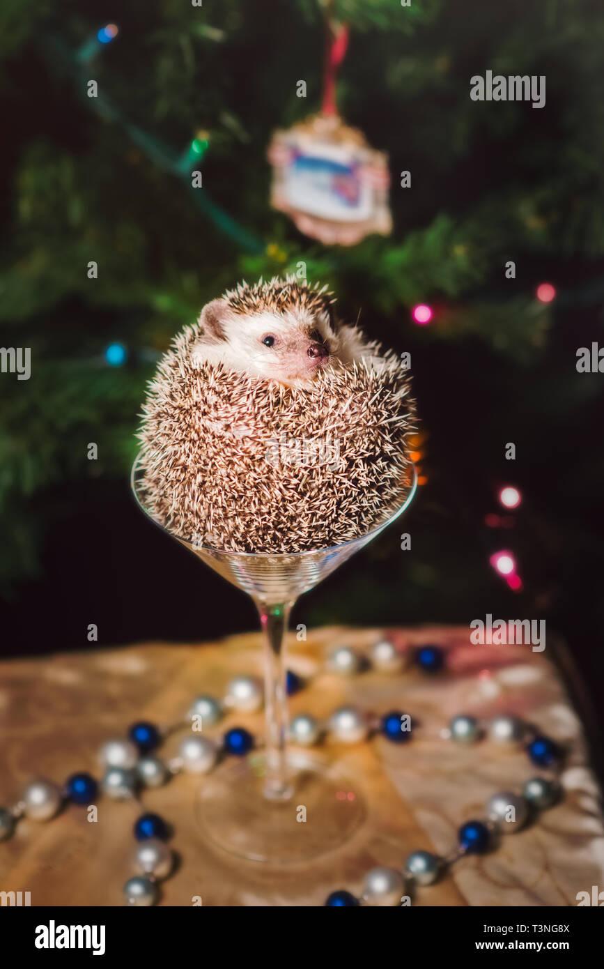 Hedgehog Christmas Ornament 2021 Hedgehog Christmas High Resolution Stock Photography And Images Alamy