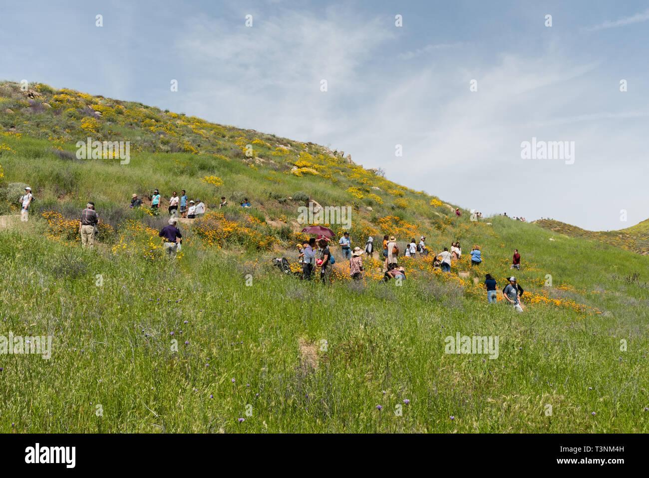Residents of Southern California enjoying beautiful  superbloom vista in the Walker Canyon near Lake Elsinore Stock Photo