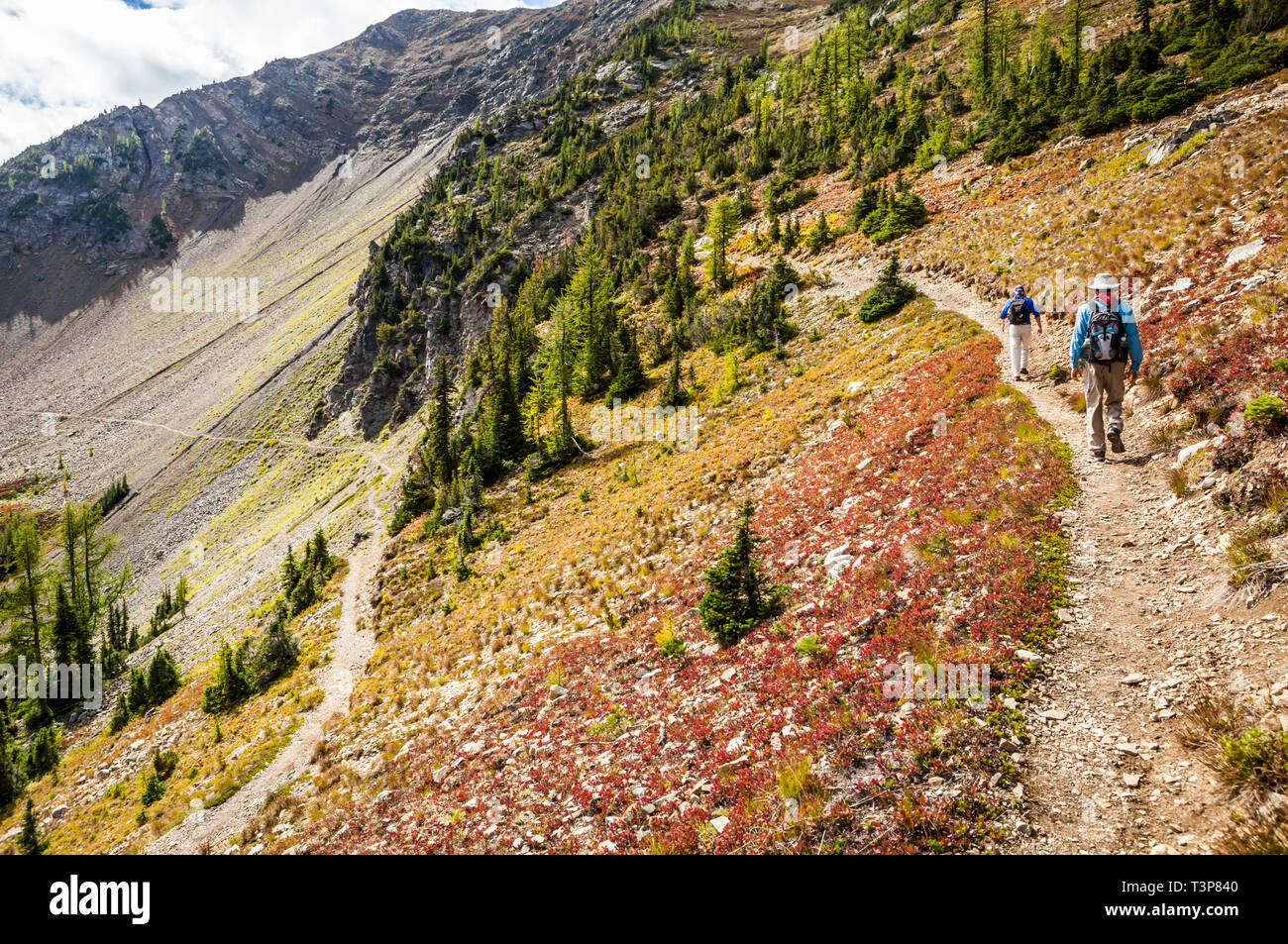 Two men hiking up some switchbacks  in the North Cascade mountains on the Pacific Crest Trail just north of Harts Pass, Washington, USA.            Mo - Stock Image