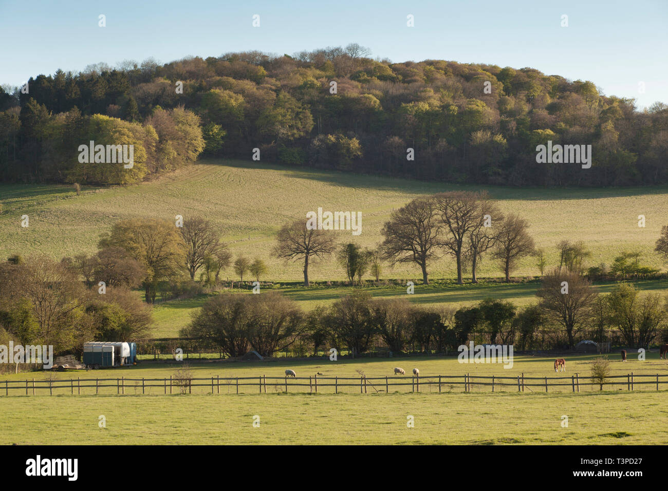 The countryside in the Chilterns nbetween Fingest, Turville and Skirmett in Spring with hilltop Beech woods and sheep grazing - Stock Image