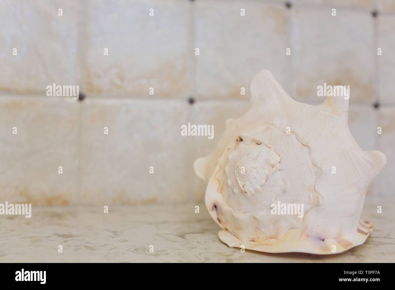 Beach Interior Decor Sea Shells And Lanterns On The Wooden Coffee Table Natural Colors Detail Of Living Room Stock Photo Alamy