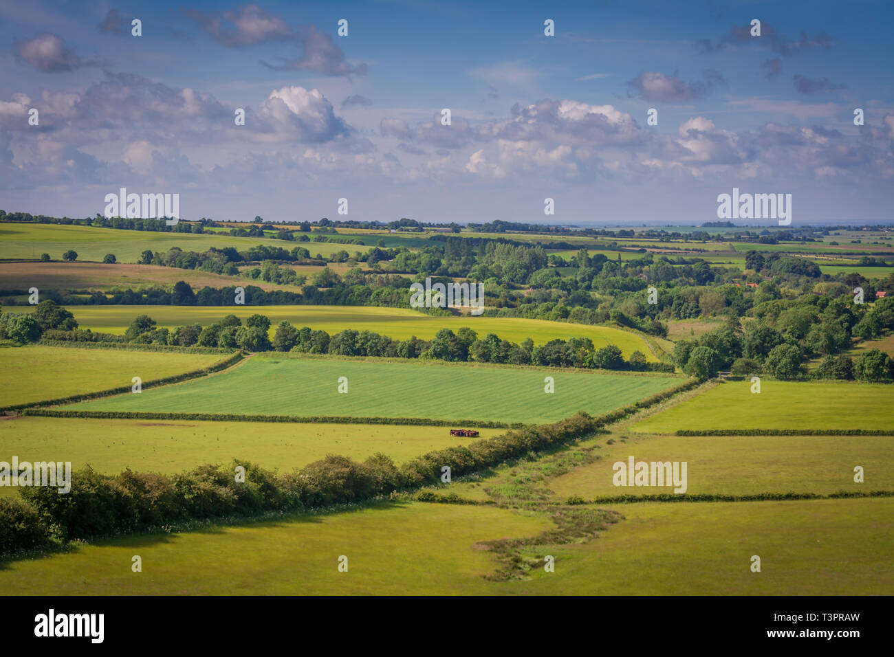 Lincolnshire wolds in summer Stock Photo