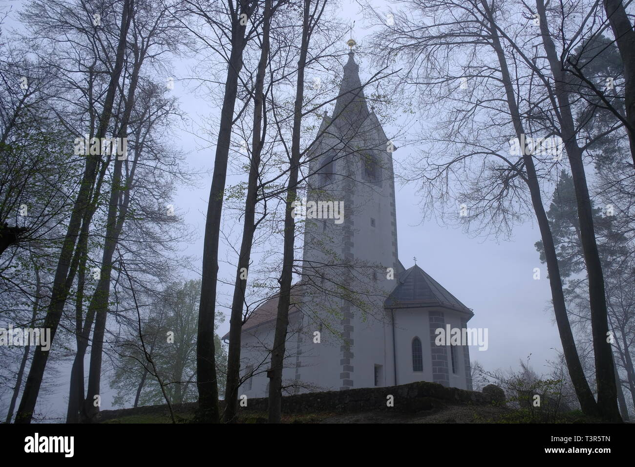 Sv Magdalena church at top of a hill on forest on a foggy misty morning,  view from low through the trees in Slovenia. Stock Photo