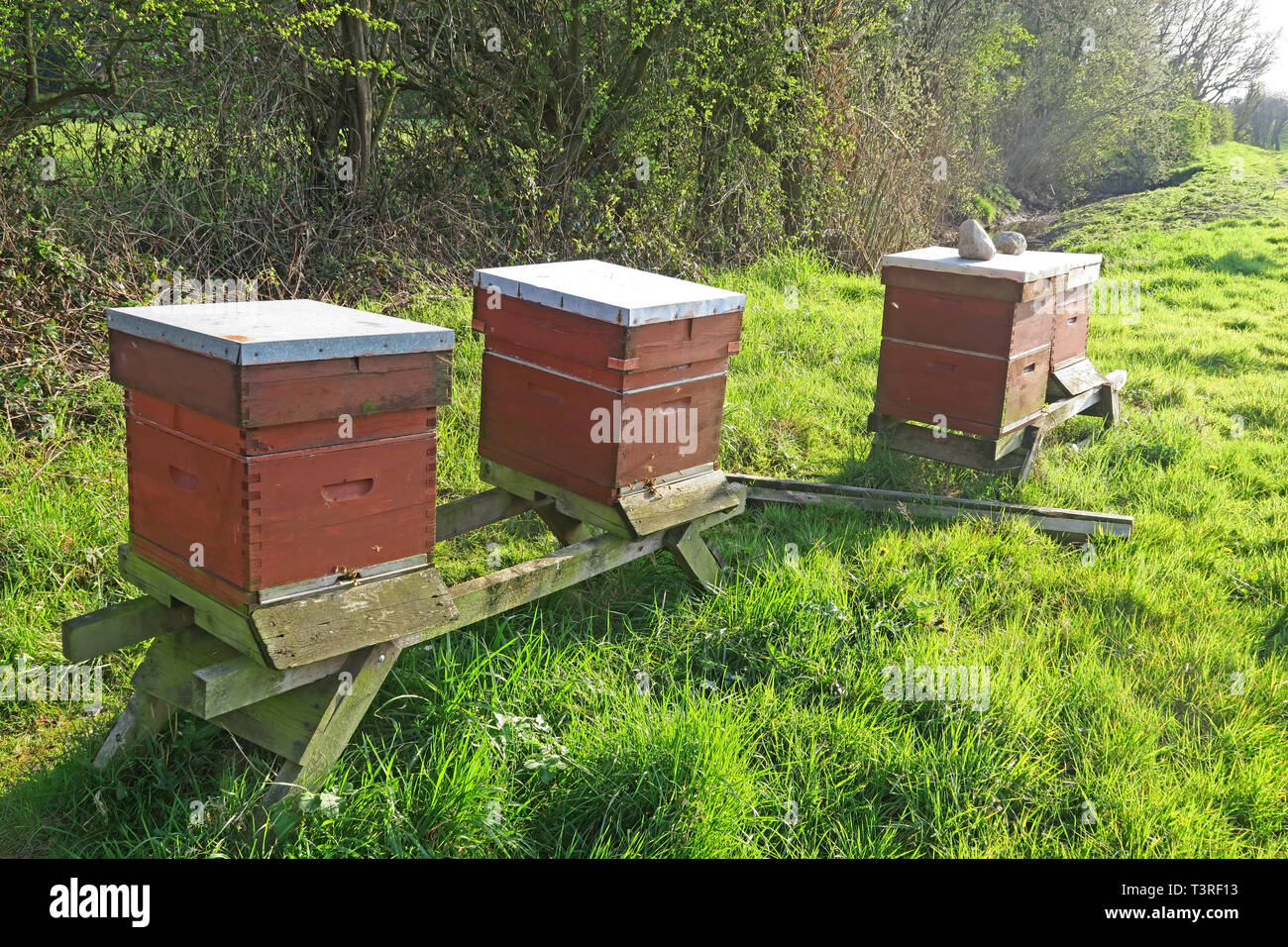 Three healthy Beehives in a field, Springtime, Grappenhall, South Warrington, Cheshire, North West England, UK - Stock Image