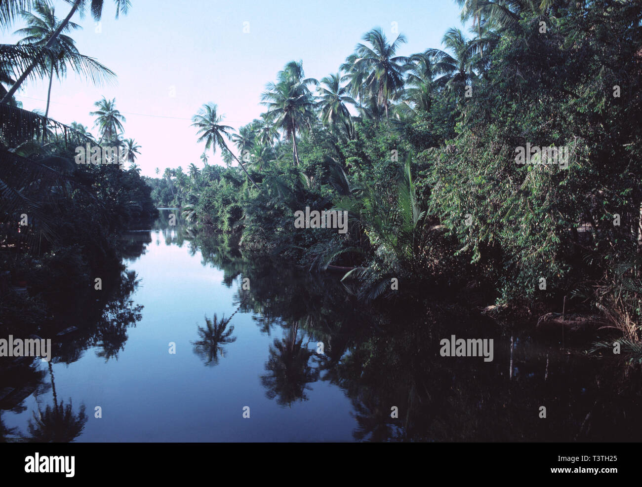 East Malaysia. Sabah. Rainforest with river and palms. Stock Photo