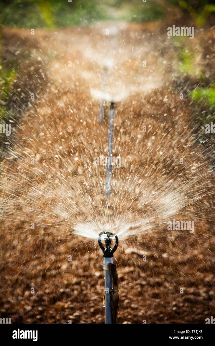 Closeup Of Water Sprinkler Stock Photo 243330811 Alamy