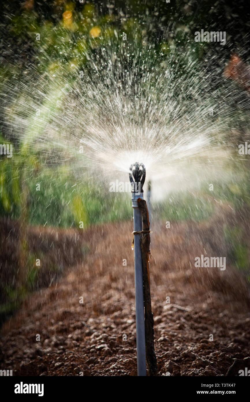 Closeup Of Water Sprinkler Stock Photo 243330983 Alamy