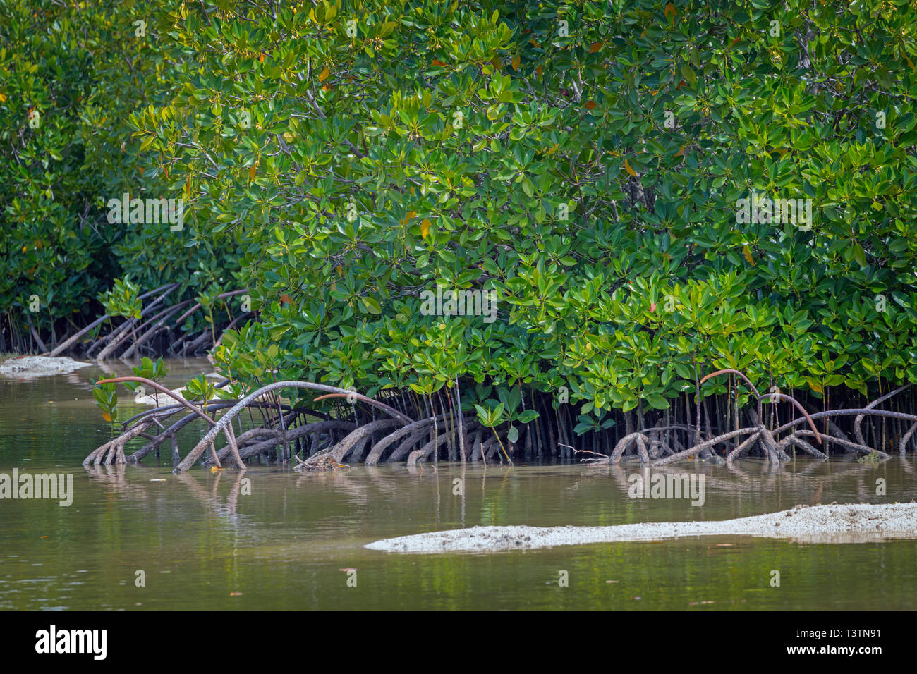 The Pointe D'Esny Wetland near Mahebourg, Mauritius, Mascarene Islands.  The wetlands have been declared a Ramsar Site of International Importance. - Stock Image