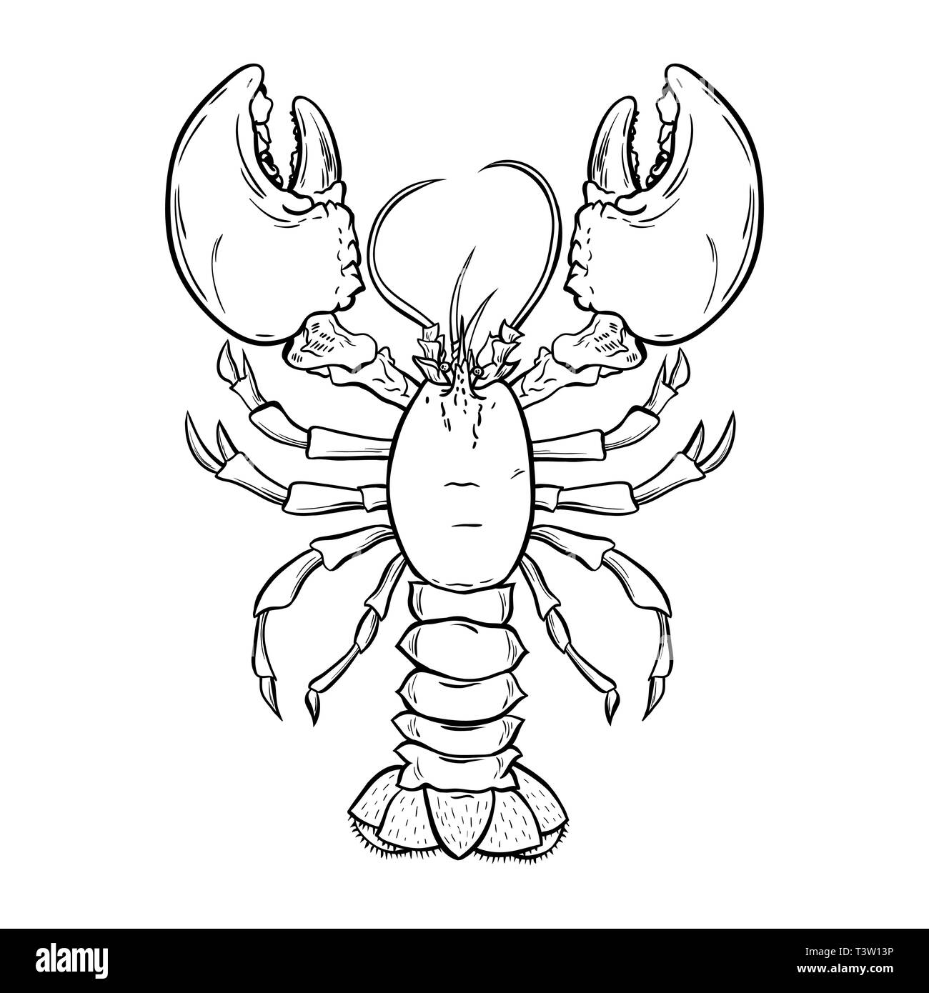 Lobster, crayfish hand drawn outline Illustration. Crawfish, crustacean ink pen sketch. Seafood restaurant delicacy. Underwater biology freehand drawing. Sealife isolated engraving design element - Stock Vector