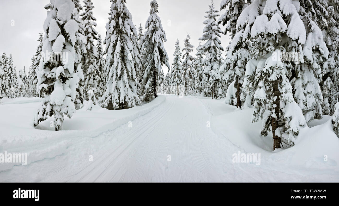 WA16129-00...WASHINGTON - Groomed cross-country ski trail on Amabils Mountain in the Okanogan - Wenatchee National Forest. - Stock Image
