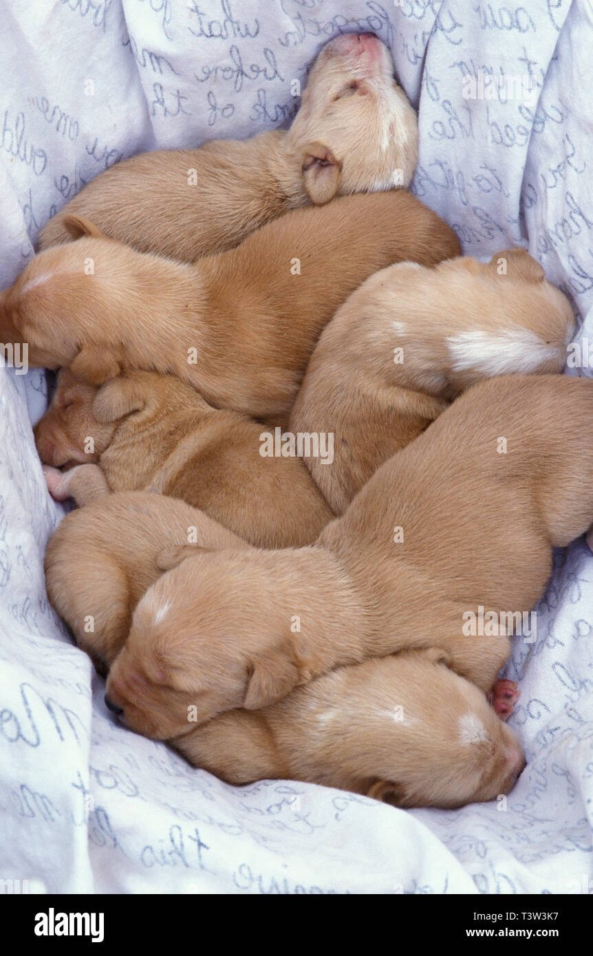 litter of newborn mongrel puppies found abandoned in Spain - Stock Image