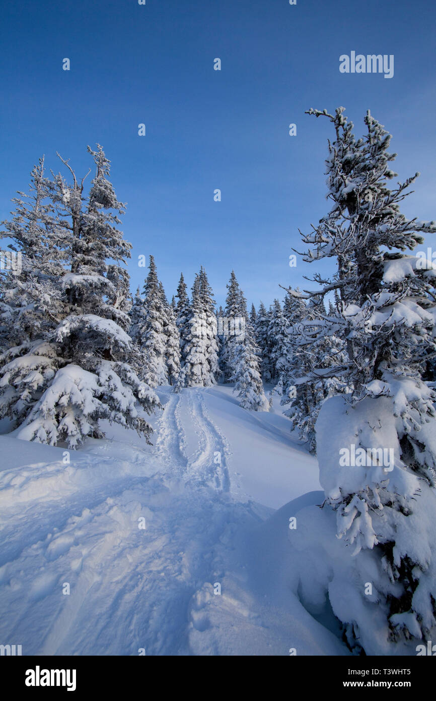 Tracks and trees on snowy hillside Stock Photo