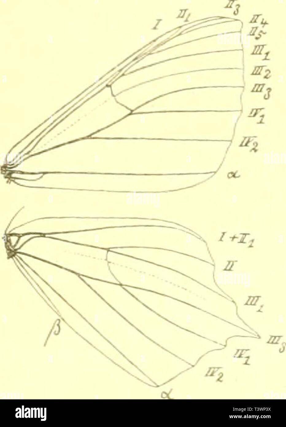 Archive image from page 104 of Die Schmetterlinge Europas (1908) - Stock Image
