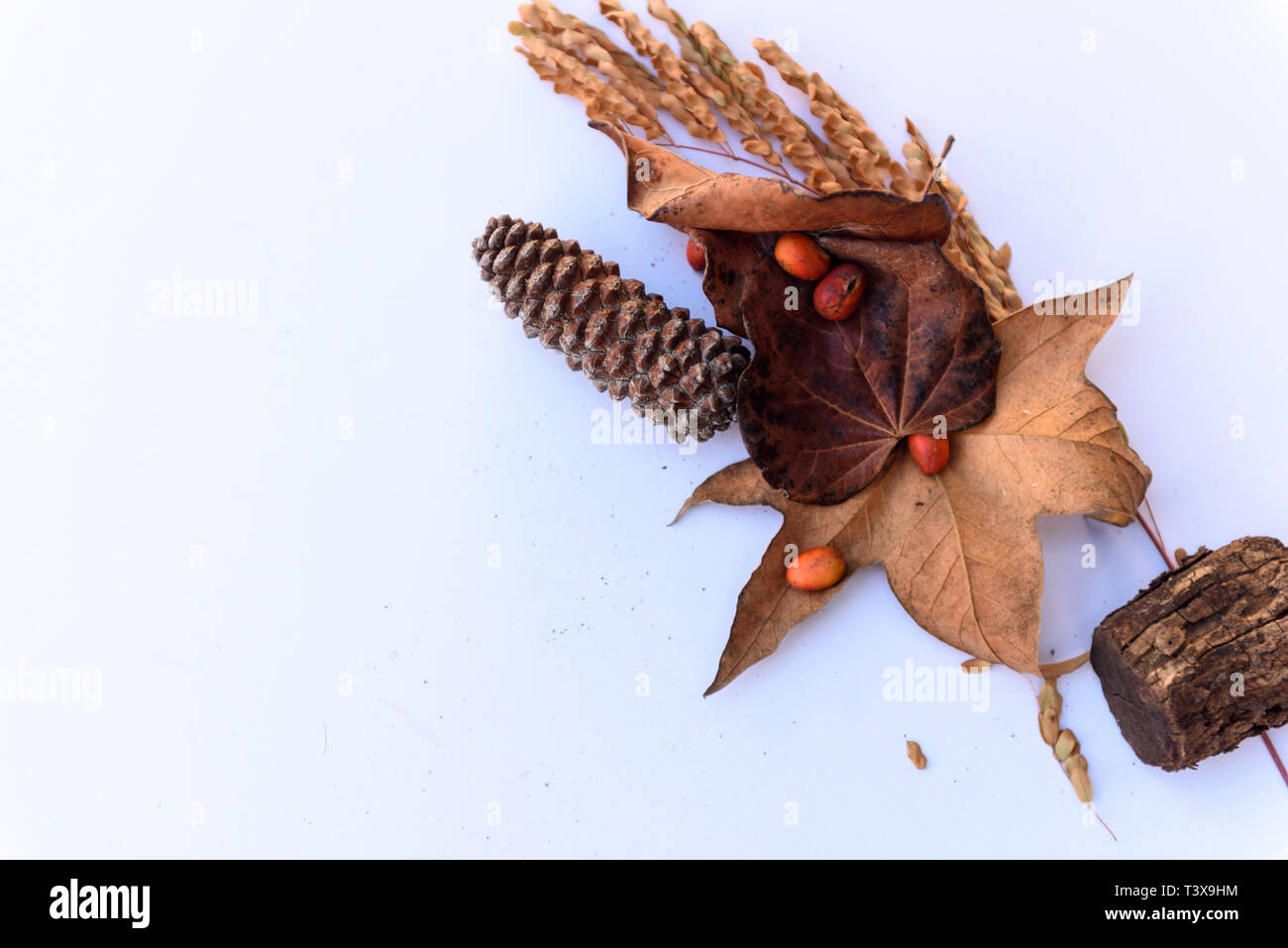 Botanical still life of leaves, pine cones, plants and berries in brown tones against white background. Stock Photo