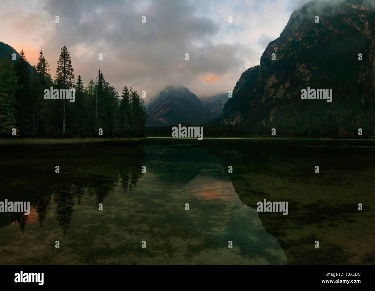 The still waters of Lake Landro at dusk reflecting the Cristallo Group, another famous massif of the Itallian Dolomites - Stock Image