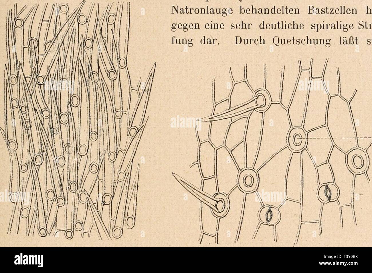 Archive Image From Page 214 Of Die Rohstoffe Des Pflanzenreichs . Die  Rohstoffe Des Pflanzenreichs :