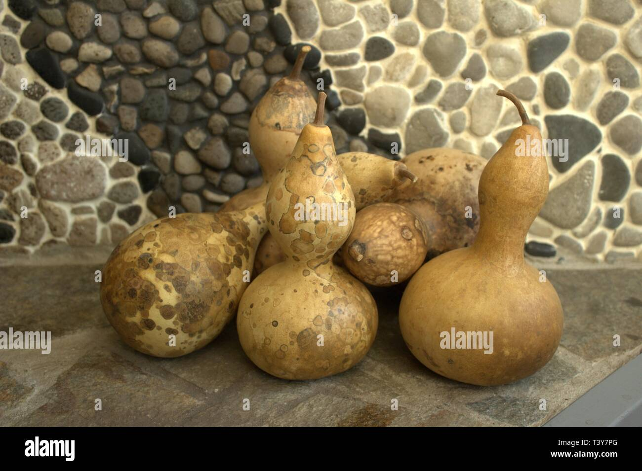 A Pile Of Dried Bottle Gourds, Ready For Crafting Stock Photo