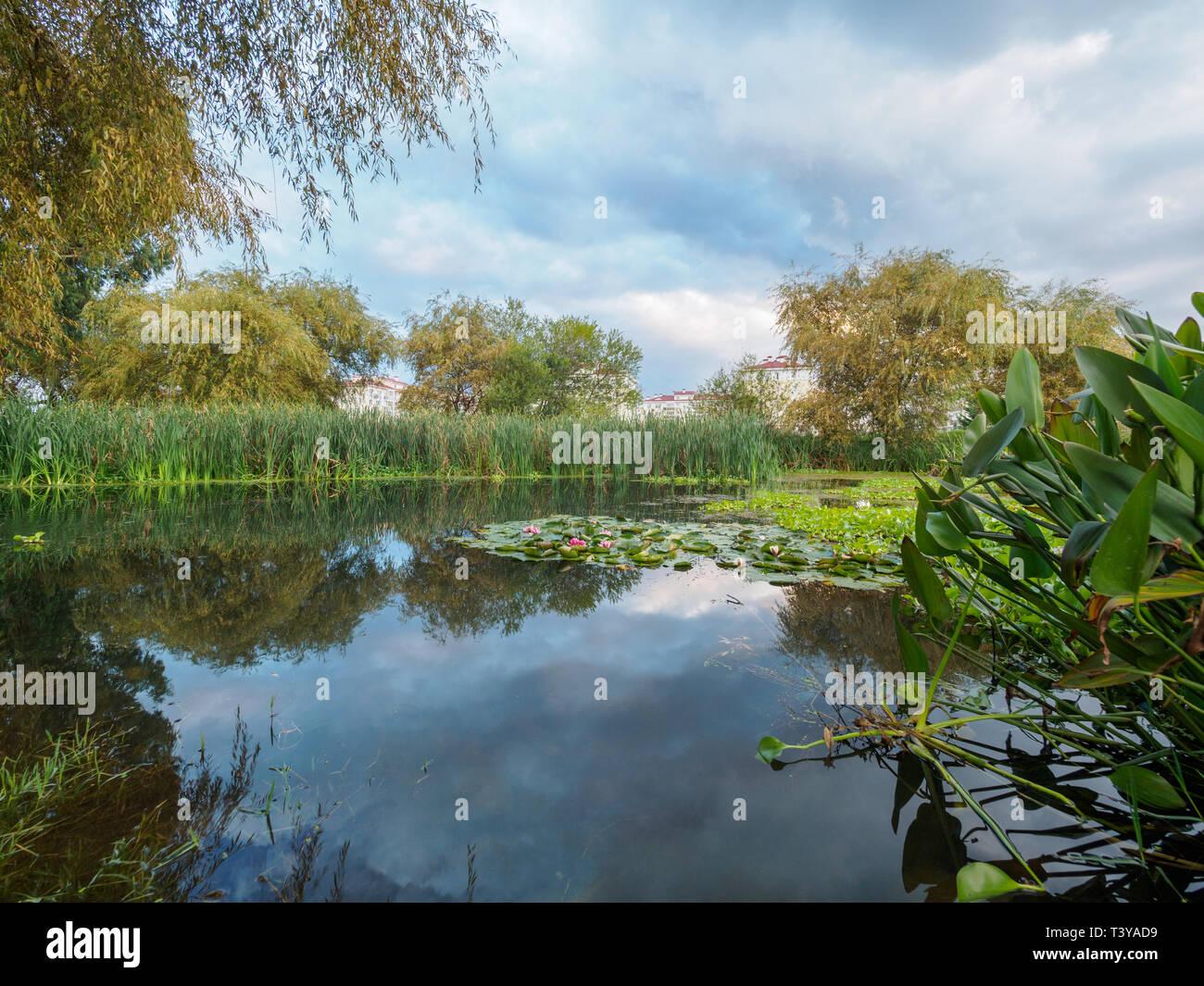 Ponds stocking — photo 7