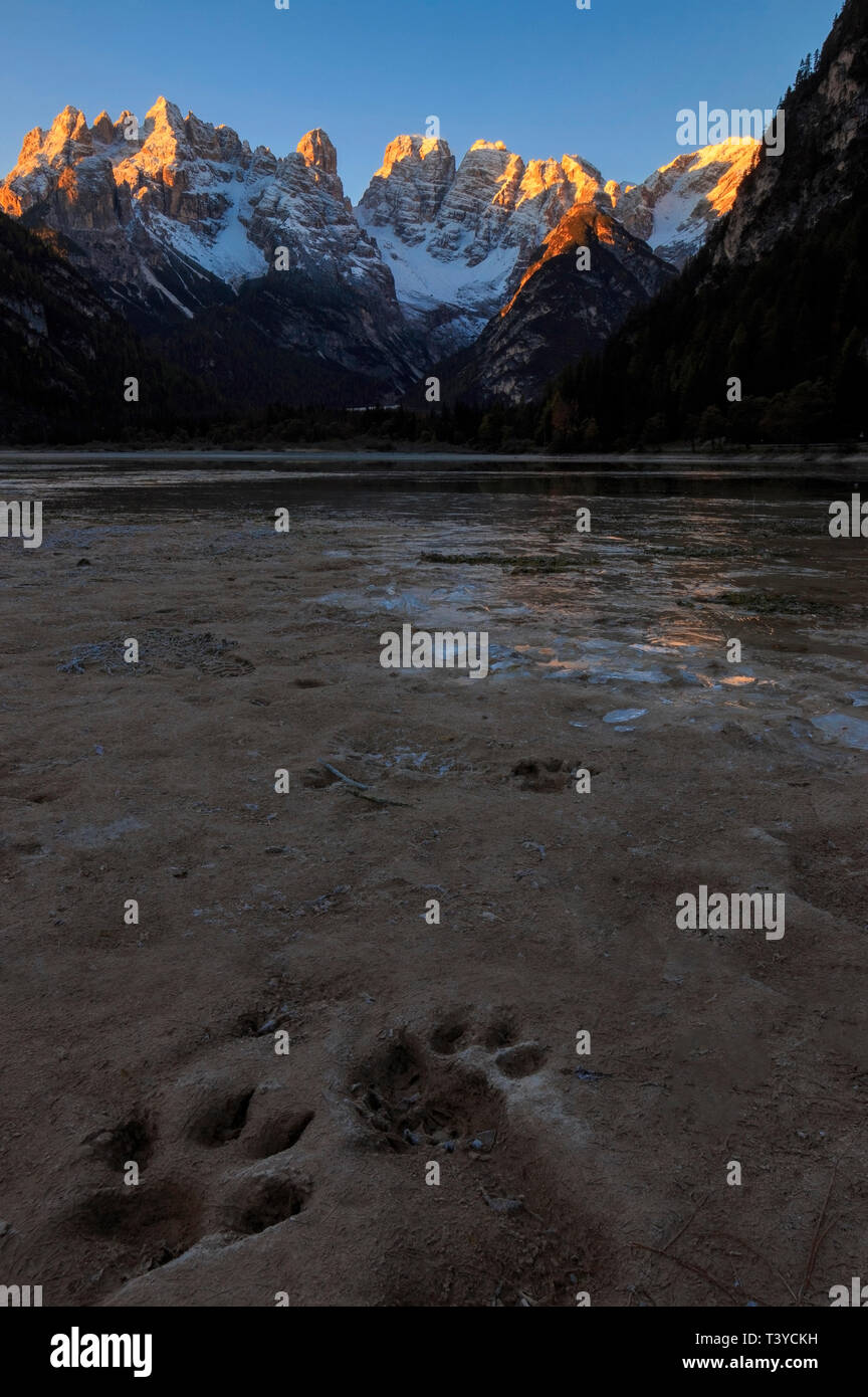 A beautiful view of the Mount Cristallo, one of the most famous massifs of the Dolomites, as seen at sunrise at Lake Landro, a small lake just at its  - Stock Image