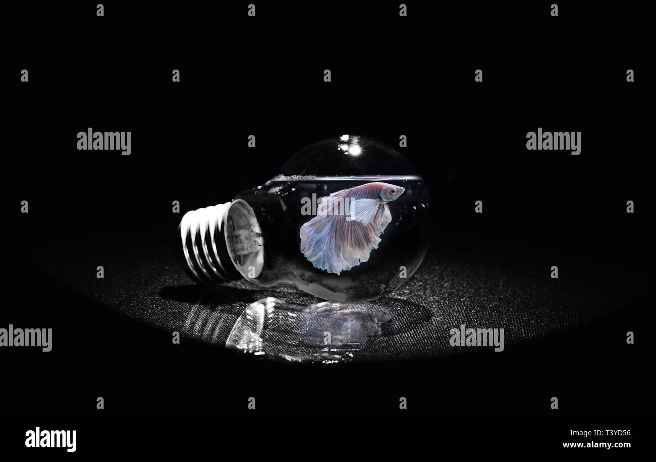 fish in lightbulb Stock Photo