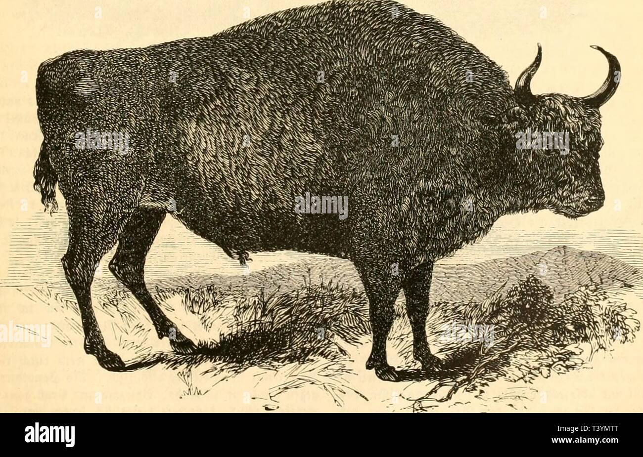 Archive image from page 442 of Die Naturgeschichte des Thierreichs (1859). Die Naturgeschichte des Thierreichs  dienaturgeschich01gieb Year: 1859  cntfvrcd'CMtcn tcJ ijcmcincn JHintct, fe i|'l rcrrarmfauaf füvjcv, mein- nodi tot Blinttavm, im 4!fa(tcr licsicii incv= jig iivof'c, cbcnfoiMcI mittie nnt ficinc Slätti-v, tic Sctcv ijl C[xön u. f. u Tic cijaitlidH- .ycinuit tcö 3?üffi'l jint tic fcuducn ÜUctcruHiicn Cftinticnv unt tcr tcnaditartcu J'H'cln. 3?on tcvt >ui« (icliiniUc er nad)«l>iiia nnt Iil>ct, bi* ,5iiiu capifdicn unt fcbanivcn ÜWccrc, fdicn im fcdiftcn S'it'i ftnntcrt nad) - Stock Image