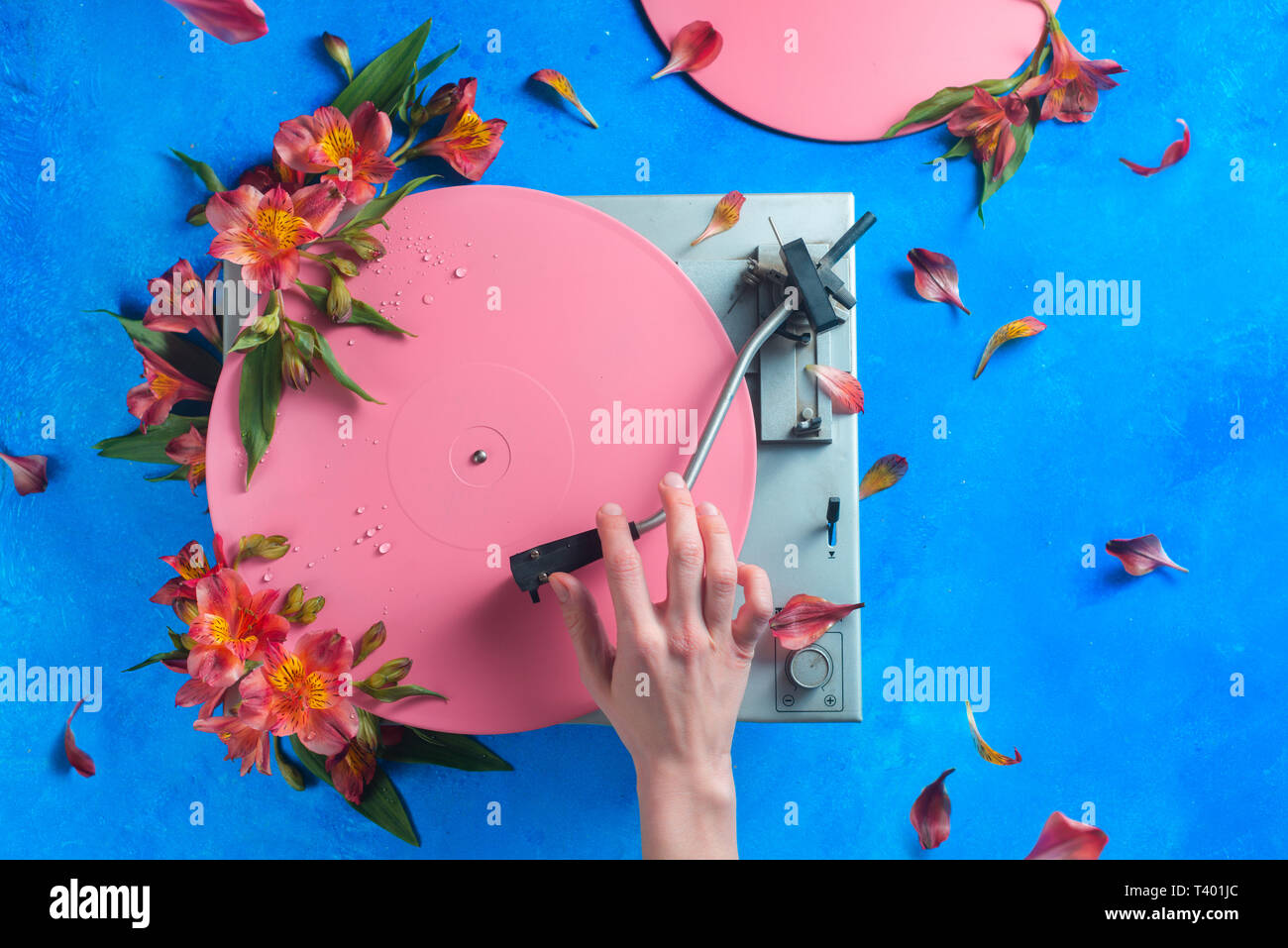 Colorful vinyl record player with petals and leaves. Pink pop up conceptual flat lay with flowers. Spring music still life - Stock Image
