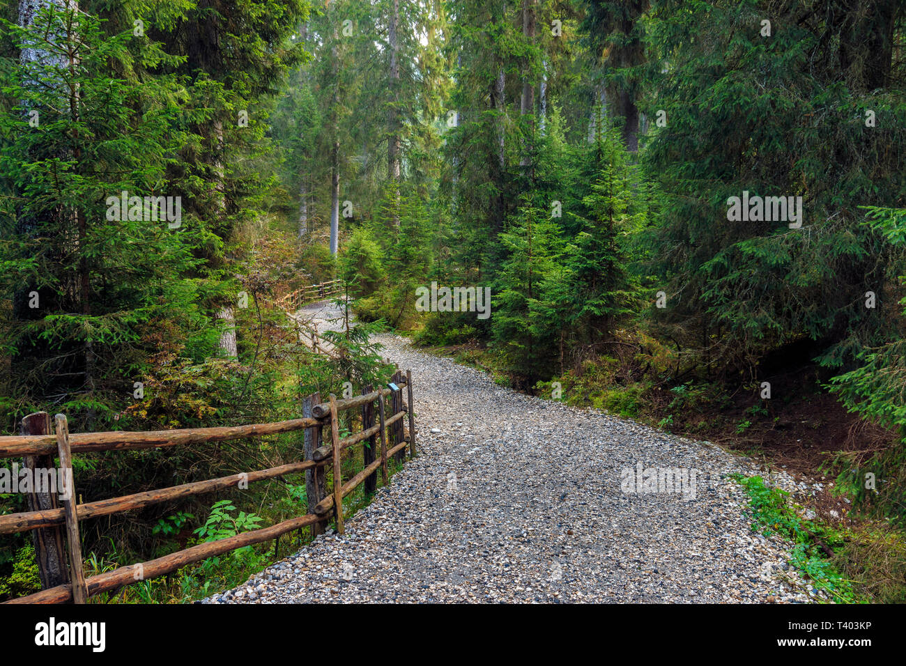 The trail in the woods surrounding the lake of Carezza (Karessee). Taken at sunrise on a morning at the beginning of October - Stock Image