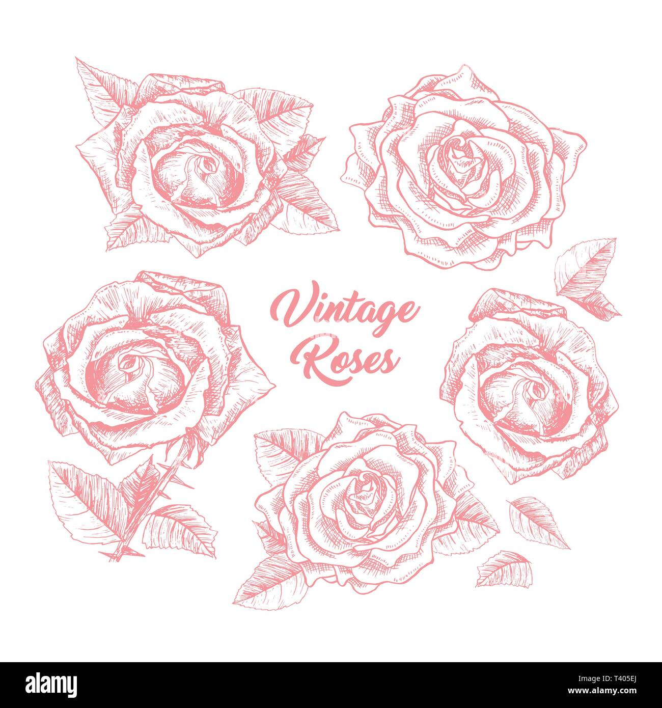 Roses Hand Drawn Vector Illustration Black And White Rosebuds Ink Pen Cliparts Floral Outline Drawings Set Flower Sketches With Vintage Roses Lettering Isolated Floral Engraving Design Elements Stock Vector Image Art