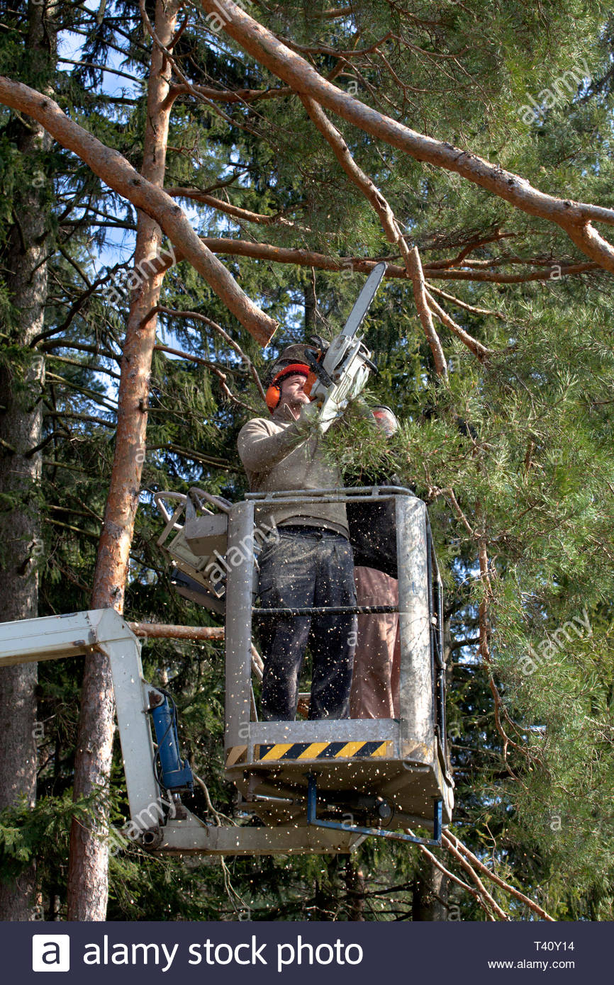 Two workers with a chainsaw trimming the tree branches on the high Hydraulic mobile platform and cut down a tree. Stock Photo