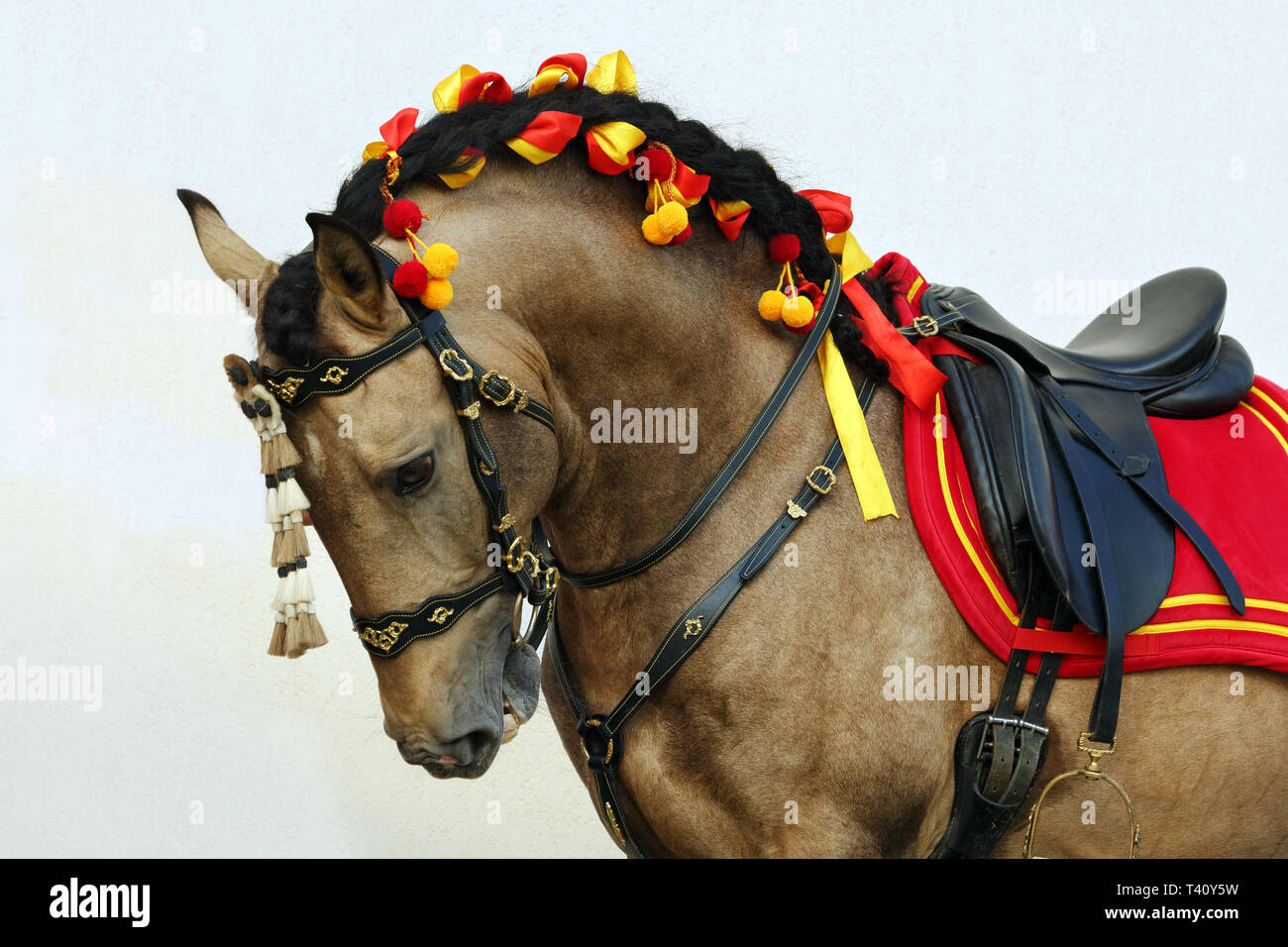 Lusitano horse is a breed of very ancient and elegant equines that developed in the Iberian Peninsula - Stock Image