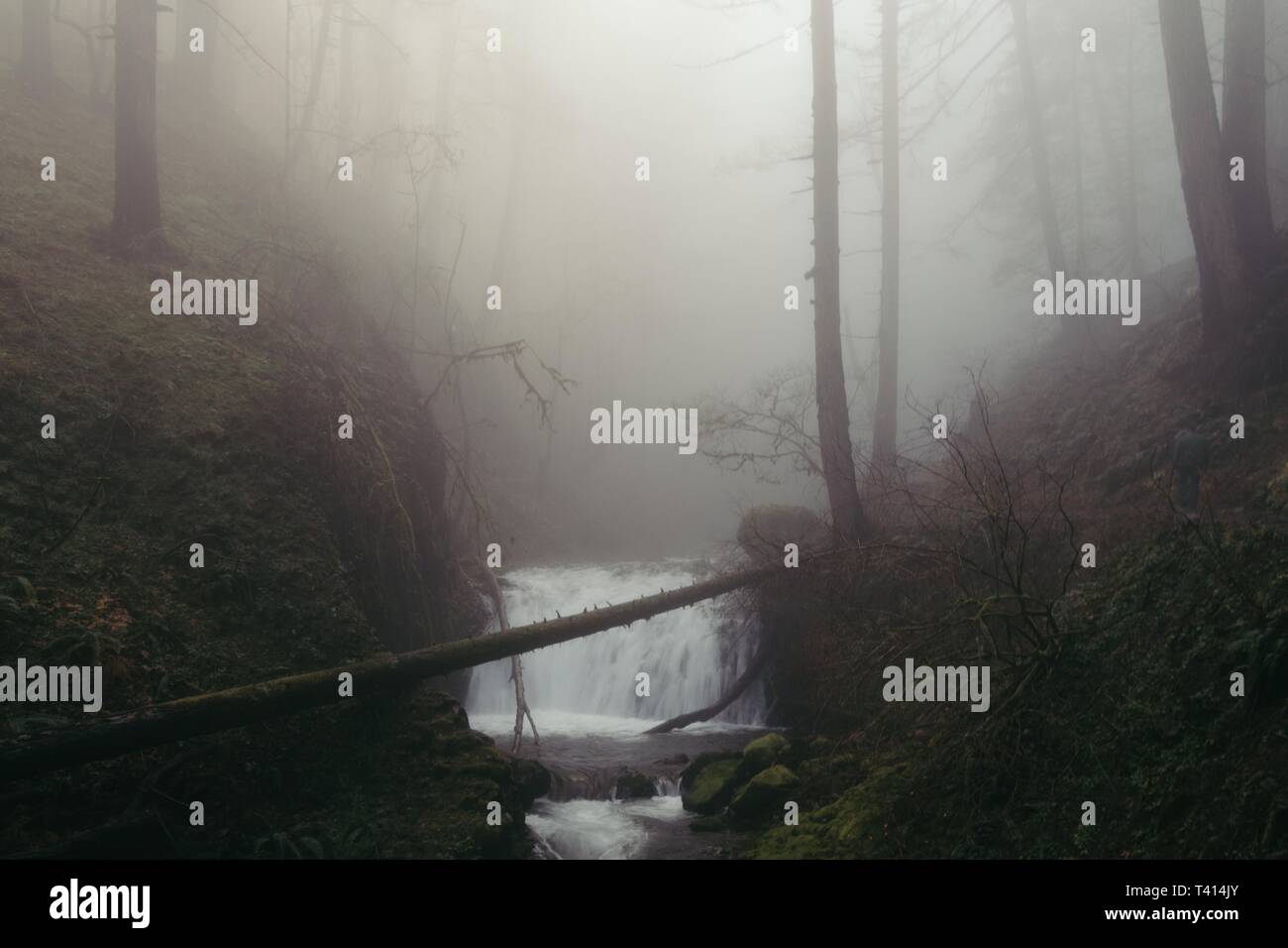 A Tiny Waterfall In A Creepy Dark Foggy Forest With Thin